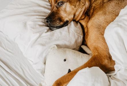 Ein echter Bester Freund - der Hund
