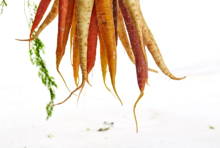 Karotten : Der Hauptschlüssel für ein gesundes Leben!
