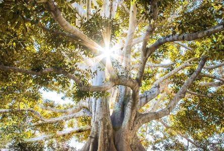 Die Natur der Vernunft mit der Vernunft der Natur verbinden