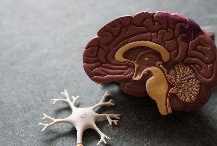 Epidurale und subdurale Hämatome: Gefährliche Blutgerinnsel im Gehirn