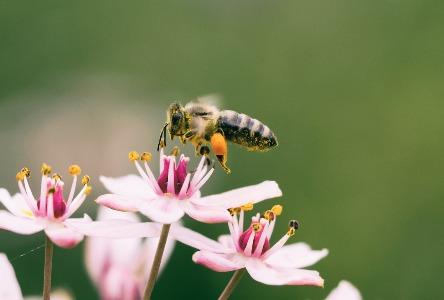Hausmittel gegen Bienenstiche